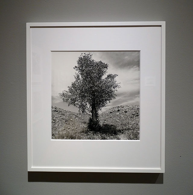 Lee Friedlander artist art